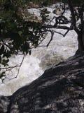 La fuerza del árbol en la furia del río foto de archivo