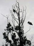 La fuga di un uccello nei colori scuri fotografia stock libera da diritti