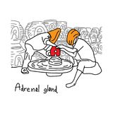 La función de la metáfora de la glándula suprarrenal es producir el horm de la adrenalina stock de ilustración