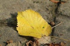 La gâchette sèche part de l'automne image stock