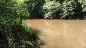 La Géorgie, parc de rive, bourdonnement d'A dedans sur une surface calme de grande crique derrière des arbres clips vidéos