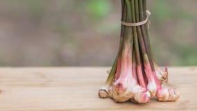 La galanga, maggior galanga, erba della Tailandia ha proprietà medicinali ed ingredienti di cottura, Fotografie Stock
