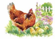 La gallina y los polluelos de la acuarela en yarda vector el ejemplo Fotografía de archivo