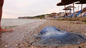 La gamba dell'uomo con le vene varicose esplora grande, blu, morto, meduse in acqua di mare bassa stock footage