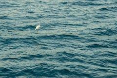 La garceta se coloca en un ancladero en el medio del mar foto de archivo