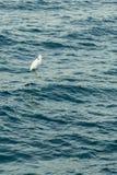 La garceta se coloca en un ancladero en el medio del mar Foto vertical imagen de archivo