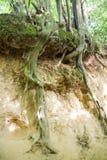 La garganta de las raíces Imagen de archivo