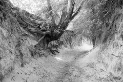 La garganta de las raíces Foto de archivo libre de regalías