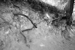 La garganta de las raíces Fotos de archivo