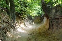 La garganta de las raíces Fotos de archivo libres de regalías