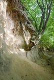 La garganta de las raíces Foto de archivo