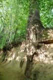 La garganta de las raíces Imagen de archivo libre de regalías