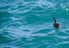 La garza flota en la agua de mar waterfowl Fotos de archivo