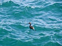 La garza flota en la agua de mar waterfowl Foto de archivo