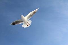 La gaviota blanca se eleva en el cielo brillante Imagenes de archivo