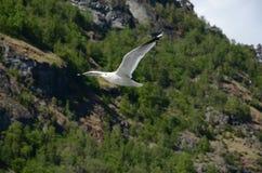 La gaviota del vuelo Imagenes de archivo