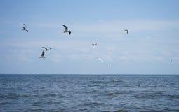 La gaviota del vuelo se eleva Fotografía de archivo libre de regalías