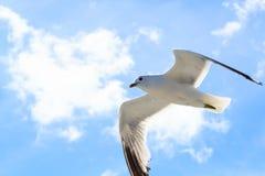 La gaviota en el cielo Foto de archivo