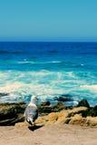 La gaviota en la costa Foto de archivo libre de regalías