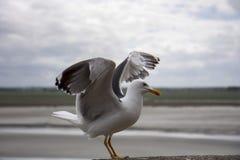 La gaviota está a punto de volar foto de archivo libre de regalías