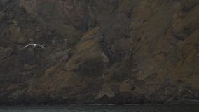 La gaviota gris vuela en el fondo de rocas costeras almacen de metraje de vídeo