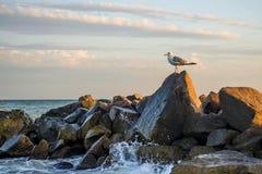 La gaviota se está colocando en una piedra en el mar foto de archivo