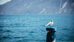 La gaviota se está sentando en una aguja de la madera, agua azul en el fondo fotos de archivo libres de regalías