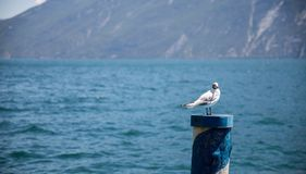 La gaviota se est? sentando en una aguja de la madera, agua azul en el fondo imagen de archivo libre de regalías
