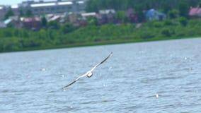 La gaviota vuela sobre el agua azul, la ciudad en el fondo Cámara lenta almacen de video