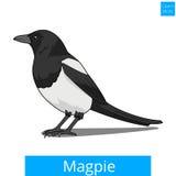 La gazza impara il vettore educativo del gioco degli uccelli illustrazione vettoriale