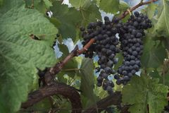 La generosidad de Vineyardâs Imagenes de archivo