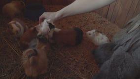 La gente alimenta i roditori ed i conigli nello zoo coltivano video d archivio