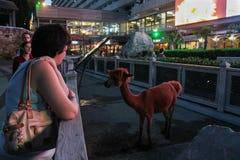 La gente alla recinzione con l'alpaca Fotografia Stock