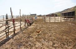 La gente asciuga lo sterco di mucca per preparare il letame fotografia stock