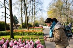 La gente asiatica prende a tulipani della foto l'azienda agricola di Keukenhof del fiore Mare della primavera Fotografie Stock