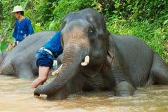 La gente baña elefantes en el río de Mae Sa Noi en el campo del elefante de Mae Sa en Chiang Mai, Tailandia Fotografía de archivo libre de regalías