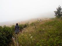 La gente camina en Kew Mae Pan Nature Trail en el nacional de Doi Inthanon Imágenes de archivo libres de regalías