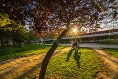 La gente camina en una tarde caliente de la primavera durante puesta del sol en el parque de Turia valencia imagen de archivo