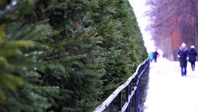 La gente camina a lo largo del callejón del parque del invierno a lo largo de los abetos verdes metrajes