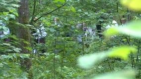 La gente cammina attraverso la foresta video d archivio