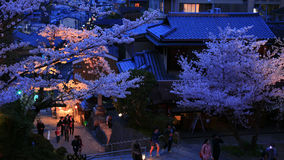 La gente cammina nella stagione del fiore di ciliegia a Kyoto Fotografie Stock Libere da Diritti