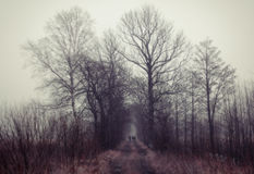La gente che cammina alla foresta mistica Immagine Stock