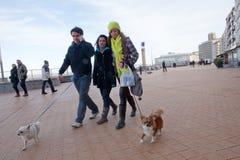 La gente che cammina i loro cani, Ostenda, Belgio Fotografia Stock