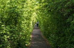 La gente che cammina in un sentiero per pedoni Fotografie Stock Libere da Diritti