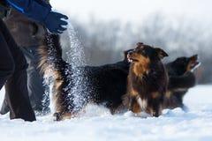 La gente che gioca con i cani nella neve Fotografia Stock