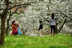 La gente che gioca in primavera di fioritura del frutteto Fotografie Stock