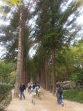 La gente che gode della visita dentro l'isola di Naminara fotografie stock