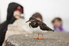 La gente che guarda un uccello Fotografie Stock Libere da Diritti