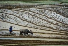 La gente che lavora al riso a terrazze sistema nel Vietnam Fotografia Stock Libera da Diritti