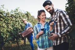 La gente che raccoglie l'uva alla vigna del viticoltore Fotografia Stock
